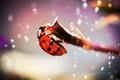 Picture focus, branch, ladybug, madpotat, ladybug, beetle, insect, photo, glare, drops