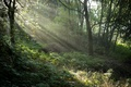 Picture UK, grass, the rays of light, trees, forest