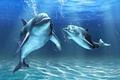 Picture sea, underwater world, art, dolphins, under water, bubbles