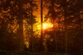 Picture glow, trees, forest, sunset
