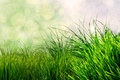Picture grass, nature, green, bokeh
