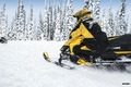 Picture Trees, Snow, Forest, Yellow, Snowmobile, Snowmobile, Ski-Doo