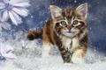 Picture winter, snow, art, kitty, children's, lorri kajenn the