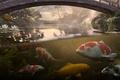 Picture fish, water, bridge, koi, Antonis Fylladitis, koi, pond