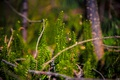 Picture nature, moss, greens, grass, macro