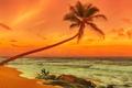 Picture sand, sea, beach, sunset, palm trees, shore, beach, sea, sunset, sand, shore, paradise, tropical