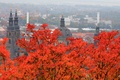 Picture autumn, leaves, trees, landscape, Germany, panorama, Cathedral, Hesse, Fulda