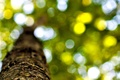 Picture leaves, macro, trees, background, tree, widescreen, Wallpaper, foliage, blur, trunk, wallpaper, leaves, bark, widescreen, background, ...