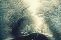 Picture road, snow, trees