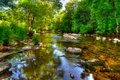 Picture trees, lake, reflection, river, stones, Exmoor, Exmoor