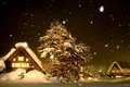 Picture home, trees, night, snow, Winter