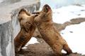 Picture aviary, marmots, animal world, fauna, snow