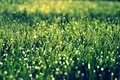 Picture widescreen, HD wallpapers, Wallpaper, greens, full screen, vegetation, the sun, background, fullscreen, macro, widescreen, background, ...