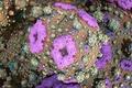 Picture light, Wallpaper, color, corals, the volume