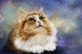 Picture cat, look, rendering, background, Kote, cat