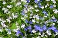 Picture flowers, widescreen, widescreen, widescreen, the Wallpapers, Wallpaper, flower, HD wallpapers, full screen, background, grass, wallpaper, ...