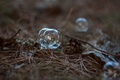 Picture forest, grass, needles, transparent, bubble, korichnevy, Helios, branches, helios