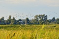 Picture flowers, Pskov, nature, grass, walk, heat, birds, field, summer, the sun, the great river, river, ...