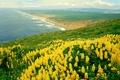 Picture nature, the ocean, california, landscape, nature