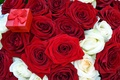 Picture flowers, roses, bouquet, red, box, offer