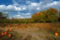 Picture clouds, pumpkin, trees, fall, autumn, colors, trees, Nature, field, field, the sky, sky, autumn, clouds, ...