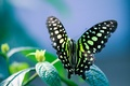 Picture bokeh, flower, sheet, background, butterfly