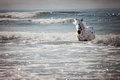Picture sea, wave, horse, bathing