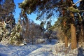 Picture photo, winter, snow, forest, nature