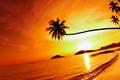 Picture palm trees, beach, palms, shore, sea, weeping palm, Mac island, Mak island, Tropical beach sunset, ...