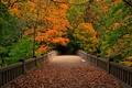Picture autumn, forest, leaves, trees, bridge, nature, Park, view, walk, forest, trees, nature, bridge, park, autumn, ...