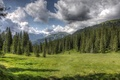 Picture forest, clouds, nature, glade, HDR