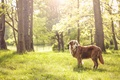 Picture summer, nature, each, dog