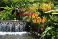 Picture flowers, pond, waterfall, Garden