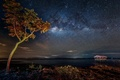 Picture stars, lake, tree, pierce, The Milky Way, secrets