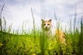 Picture cat, look, summer, grass, cat