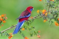 Picture flowers, branch, wildlife, parrot, bird