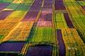 Picture field, nature, paint, Poland, farm, Mites