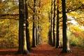 Picture alley, Park, autumn