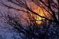Picture the sky, twigs, silhouette, nature, trees, sunset