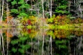 Picture trees, water, reflection, autumn, forest