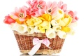 Picture flowers, tape, bouquet, nature, basket, flower, tulips, bow, Tulip, basket, spring