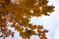 Picture fullscreen, wallpaper, autumn in the Park, background, full screen, widescreen save, HD wallpapers, Wallpaper, the ...