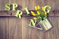 Picture tree, spring, yellow, tulips, lake, wood, flowers, tulips, spring