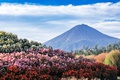 Picture the sky, landscape, flowers, mountain, Japan, Fuji