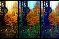 Picture The bushes, Tire, Yellow, Trees, Foliage, Autumn, Color, Photo, Wheel, Tire