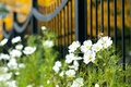 Picture greens, white, macro, flowers, widescreen, Wallpaper, vegetation, the fence, plant, blur, gate, the fence, wallpaper, ...