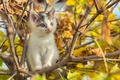 Picture autumn, tree, cat, puppy, buds, branches, foliage