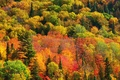 Picture autumn, forest, paint, Nature, Canada, Ontario