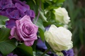 Picture hydrangea, lilac, Bush, roses, white, leaves