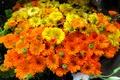 Picture petals, bouquet, nature